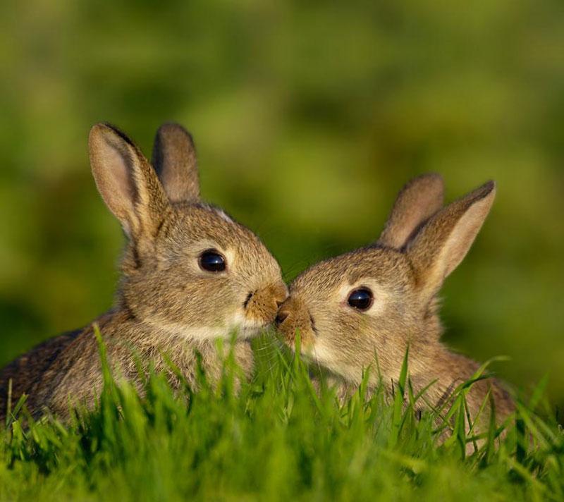 cutest rabbit couple