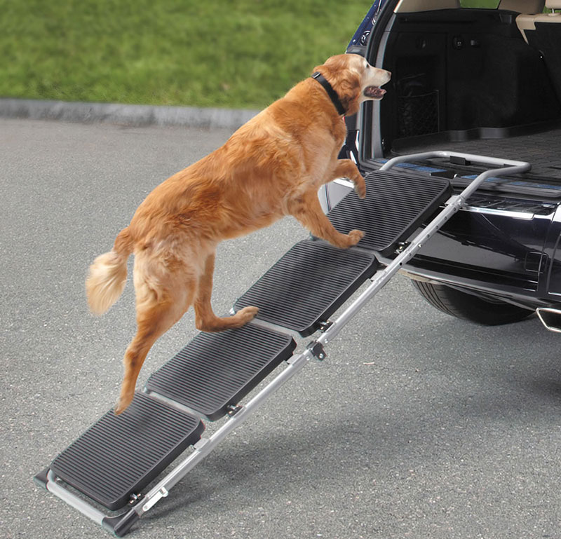 dog ramp for car