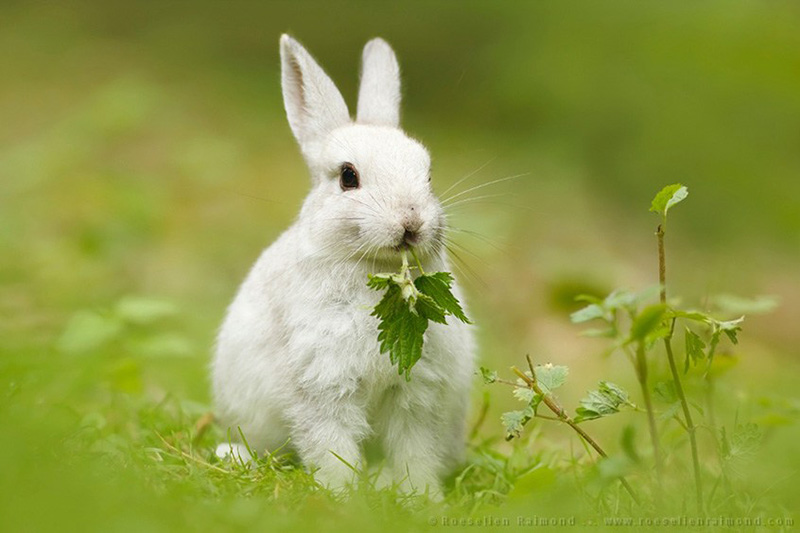 how cute this rabbit