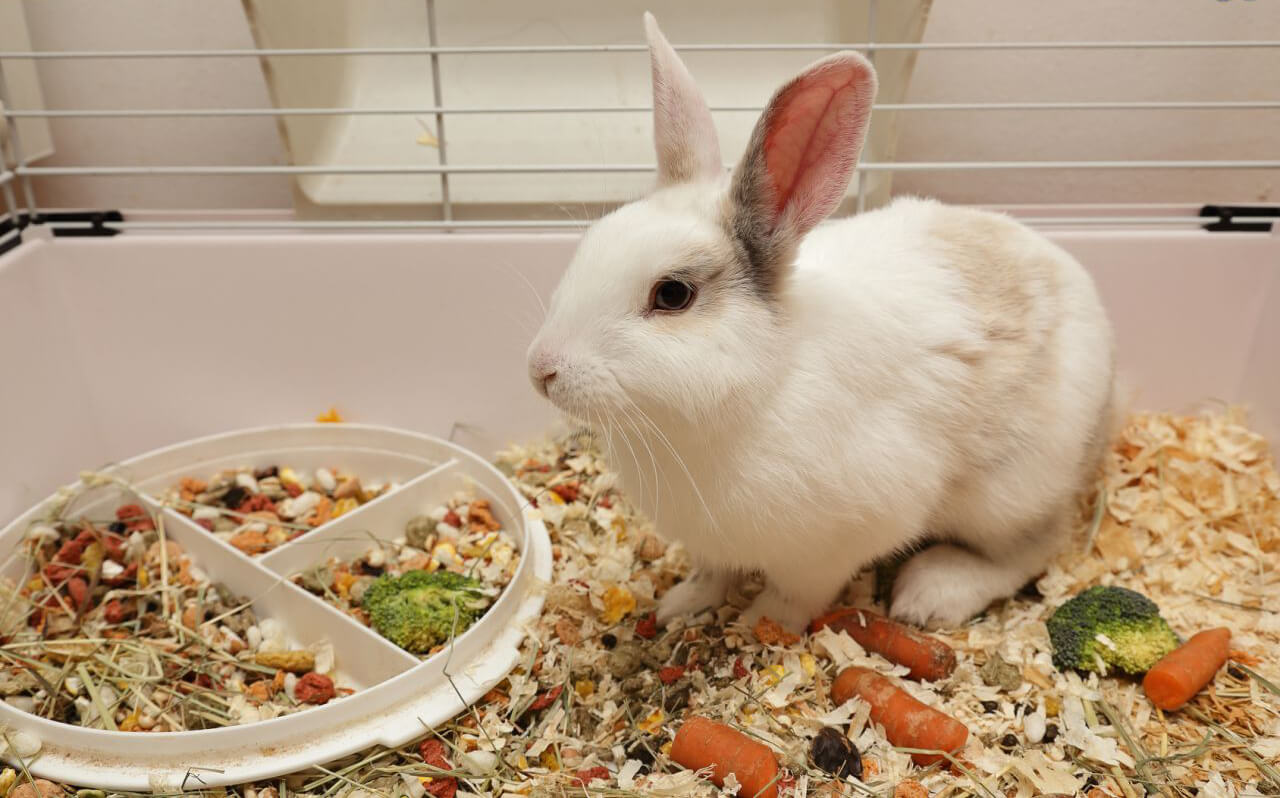 Thinking of Having Rabbits as Pets? Here's How