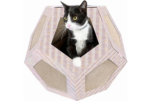 friends forever polygon cat house