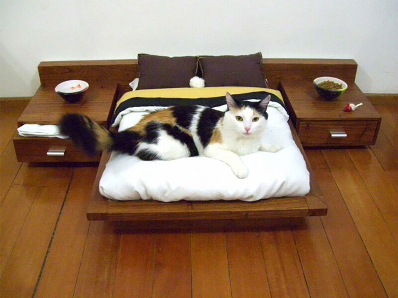 Top 10 Best Cat Beds For Kittens in 2018 Reviews