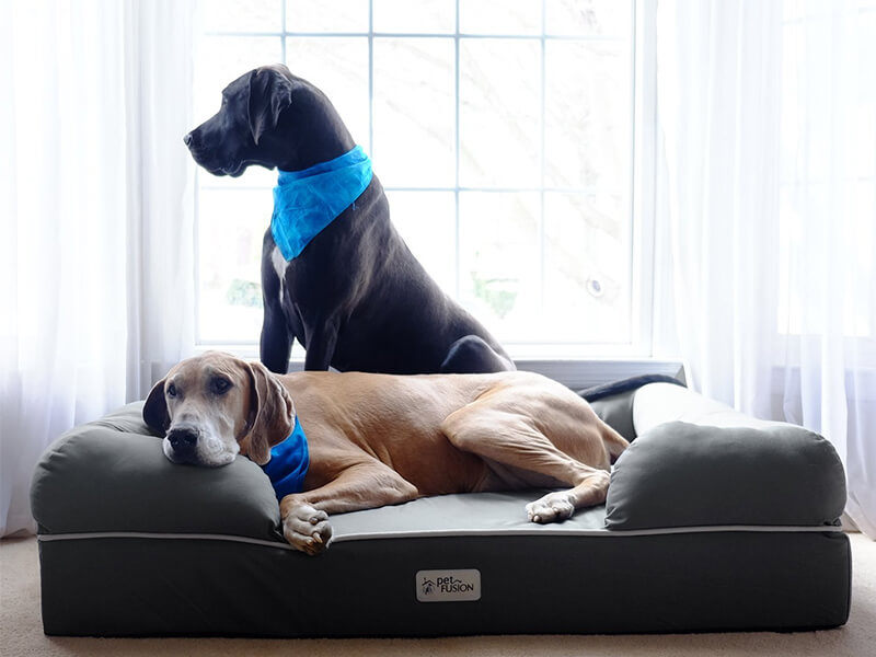 Top 10 Best Pet Sofas For Cats And Dogs in 2018 Reviews