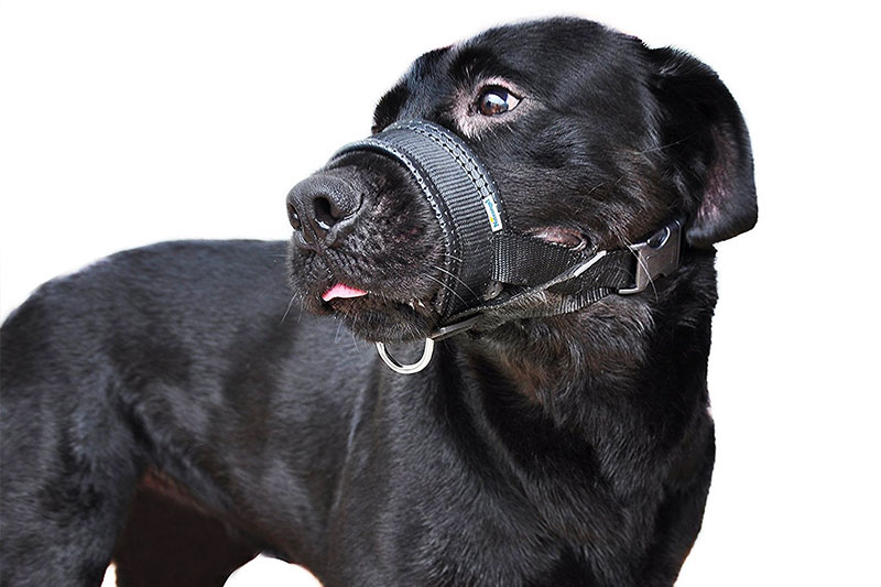 Top 10 Best Dog Muzzles to Prevent Biting of 2019 Review