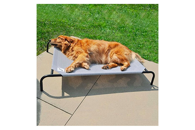 The Best Dog Bed with Covered Top of 2018 Review