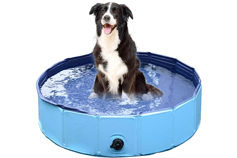 best inflatable dog pool: enjoy hot summers with your furry friends