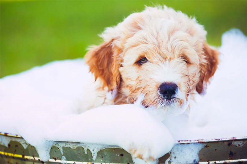 Top 10 Best Puppy Shampoos of 2018 Review