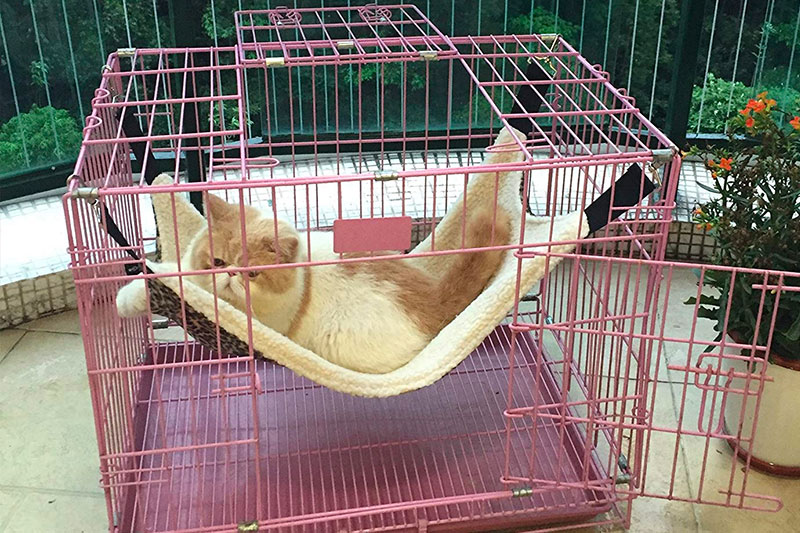 Top 10 Best Cat Hammocks for Cat Cage of 2018 Review
