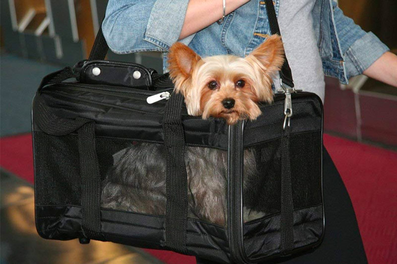 Top 10 Best Airline Approved Pet Carrier of 2019 Review