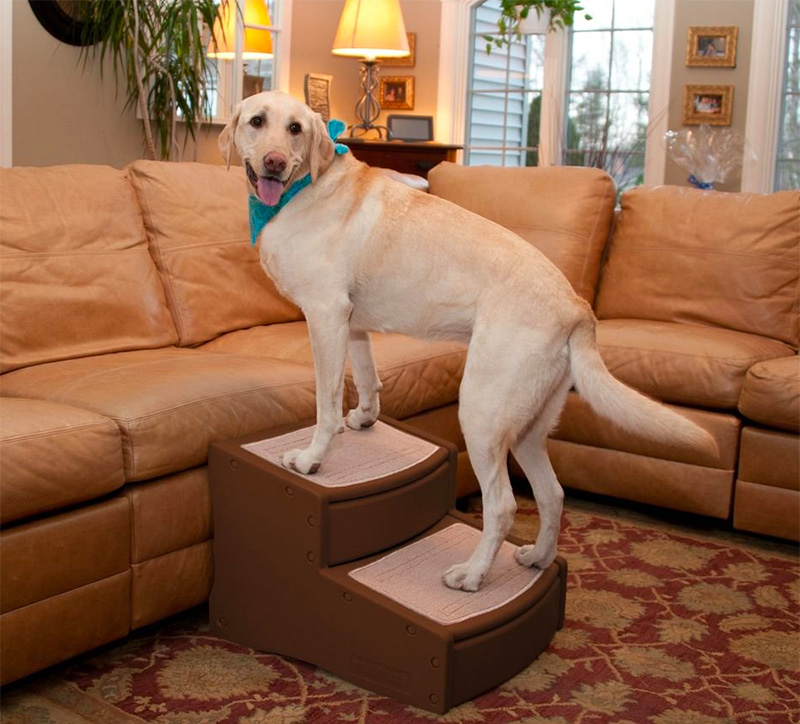 Top 10 Best Dog Stairs For Big Dogs of 2020 Review