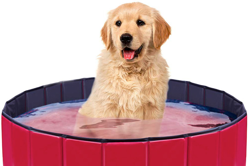 The 10 Best Dog Bathing Tub of 2021 Review