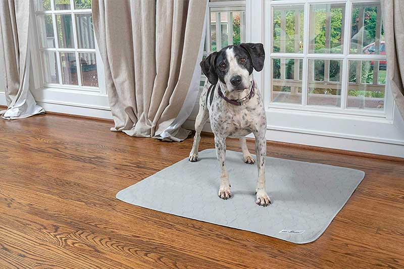 The 10 Best Washable Dog Pee Pads of 2021 Review & Buying Guide