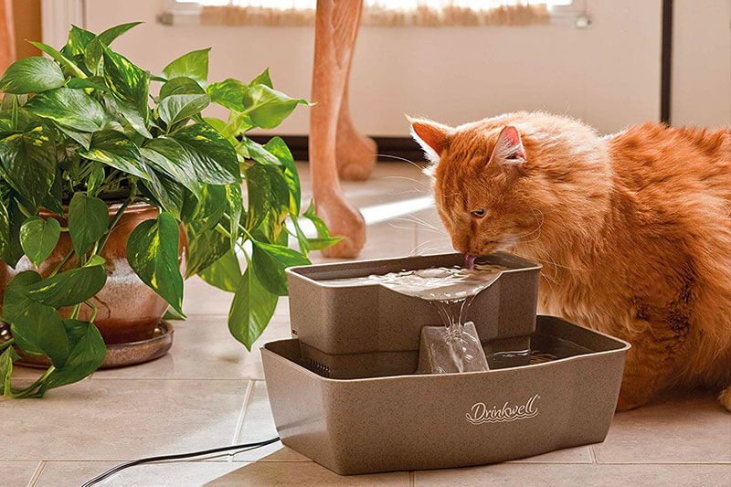 Top 10 Best Battery Operated Cat Fountain of 2020 Review