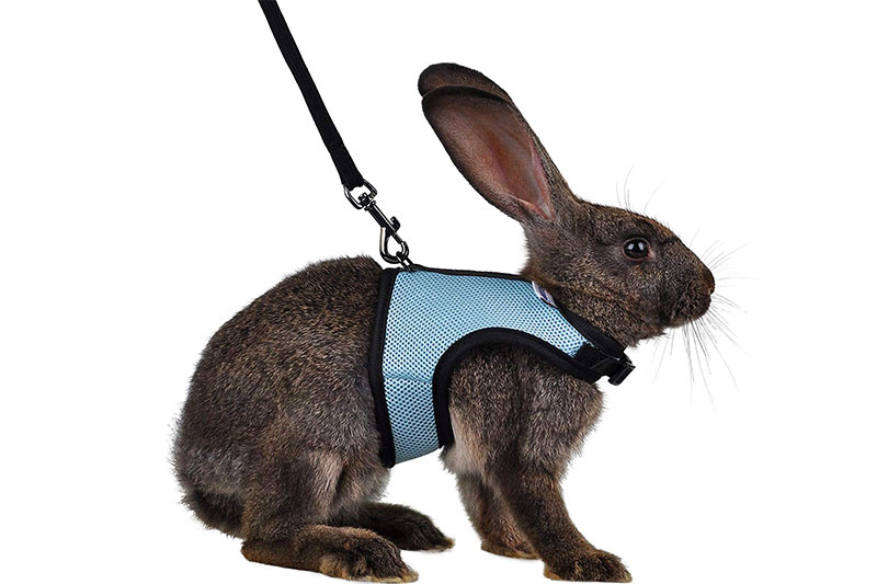 The 10 Best Breathable Bunny Harness of 2021 Review & Buyer's Guide