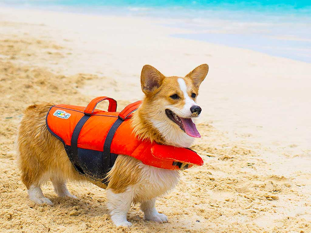 Top 10 Best Dog Life Jacket of 2020 Review