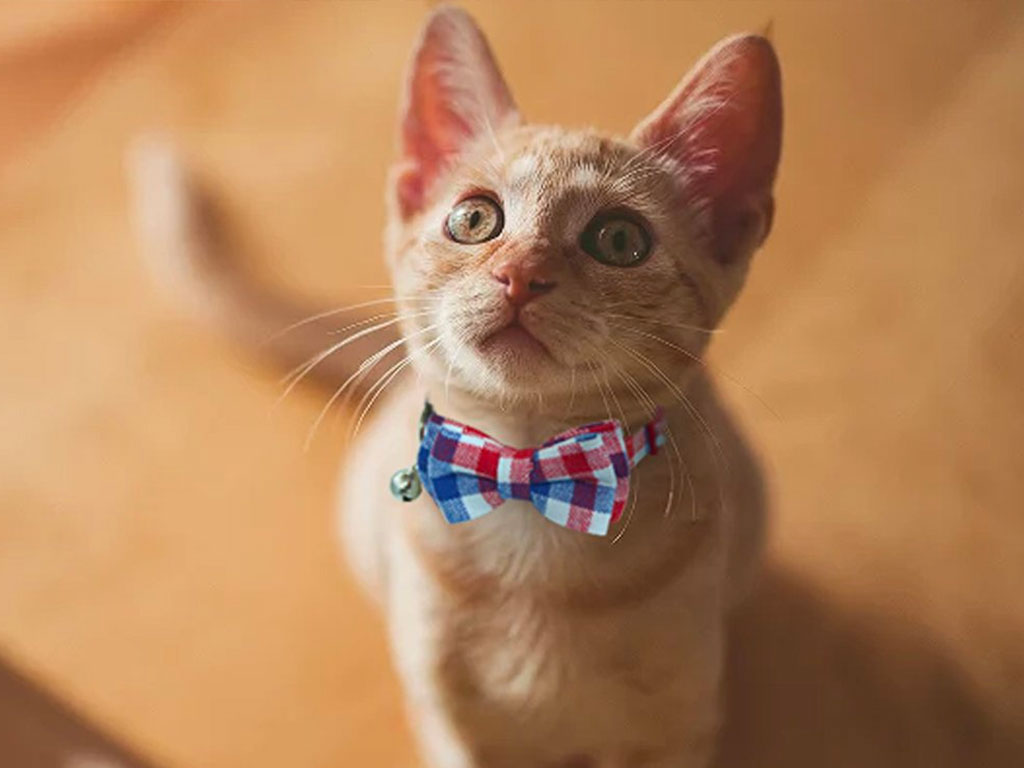 Top 10 Cutest Bowtie Cat Collar of 2021 Review