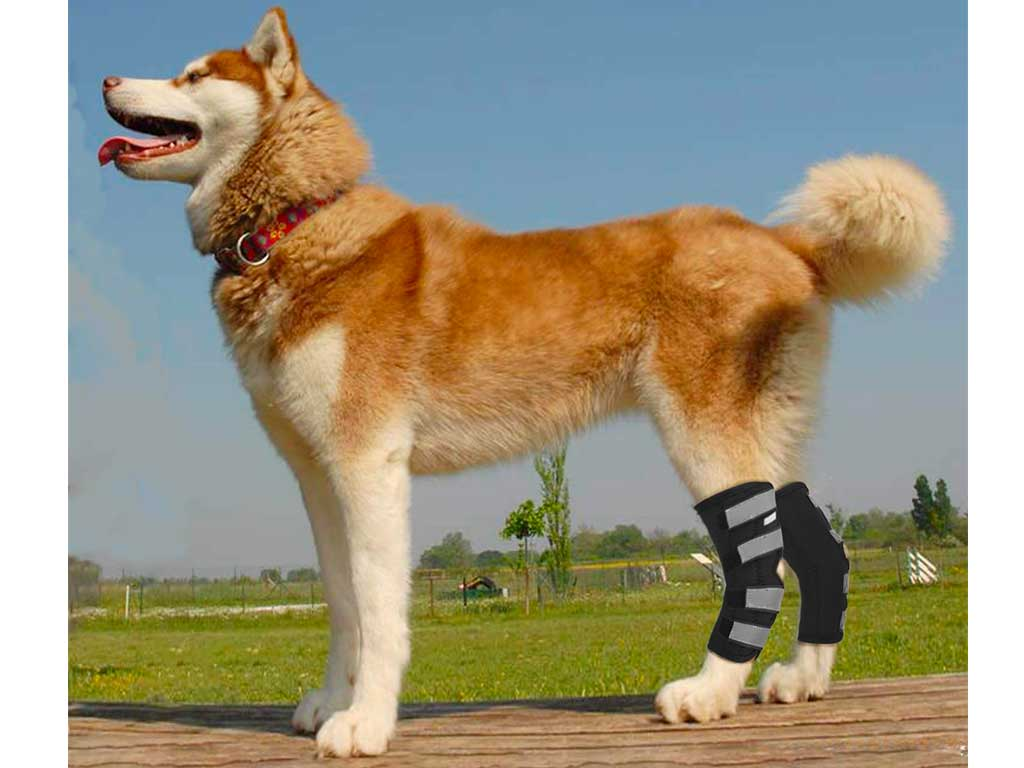 Top 10 Best Dog Knee Brace of 2020 Review