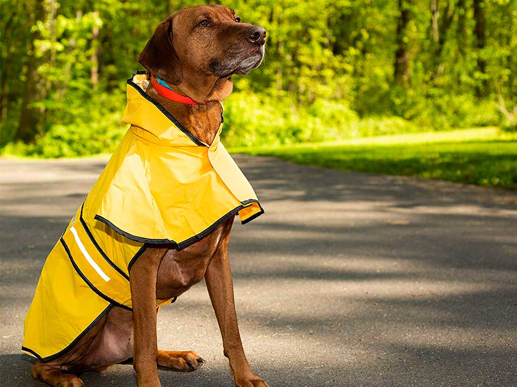Top 10 Best Dog Raincoat of 2019 Review