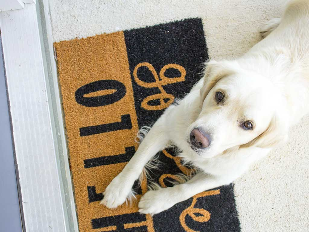 Top 10 Best Doormats for Dogs of 2020 Review