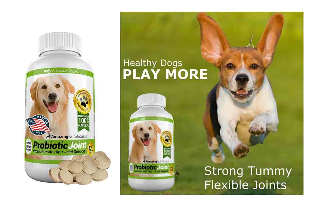 Amazing Probiotics for Dogs Eliminates Diarrhea and Gas