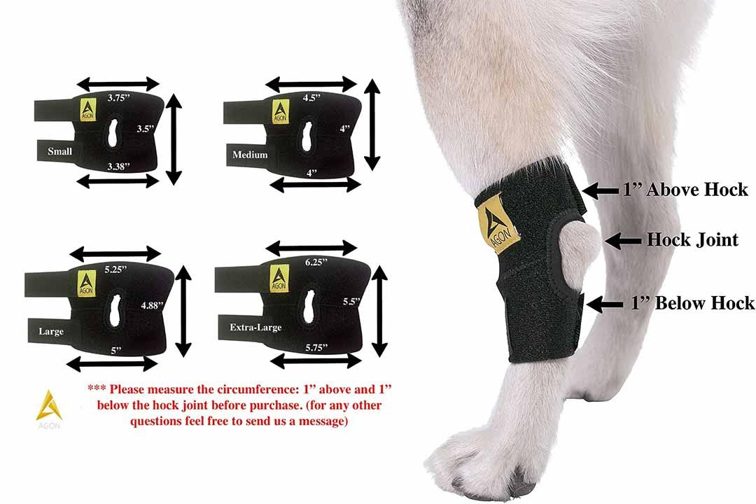 Agon Dog Canine Rear Hock Joint Brace