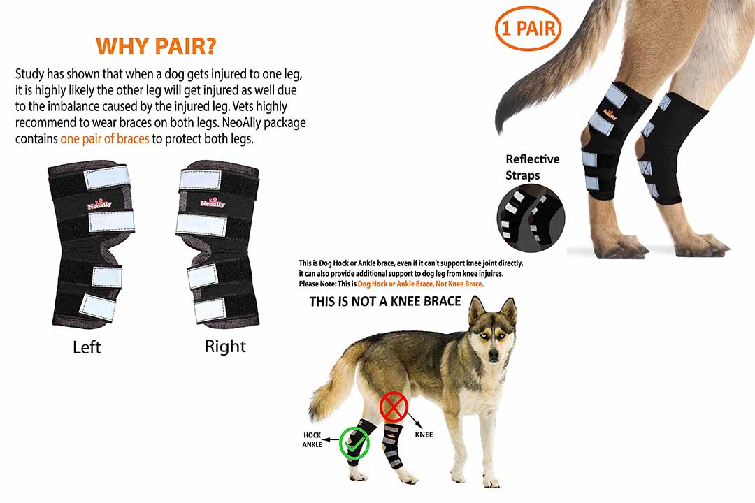 NeoAlly Dog Rear Leg Braces
