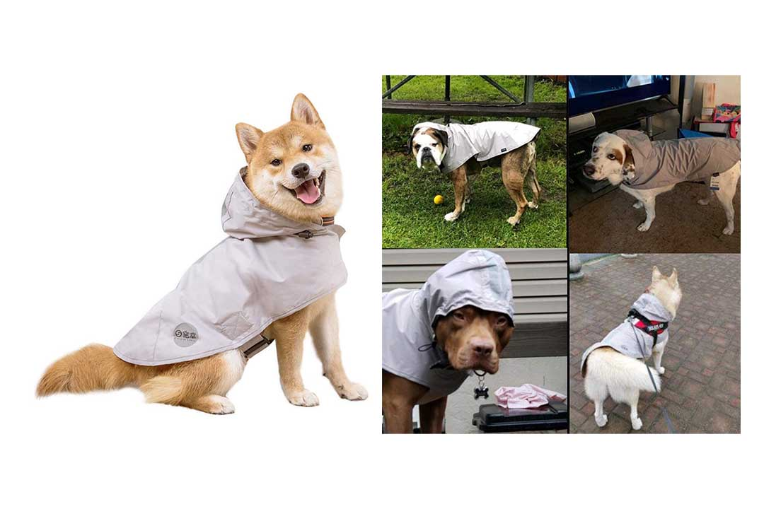 Nourse CHOWSING Dog Raincoat