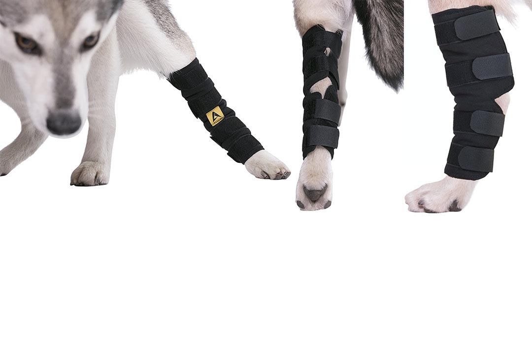 Agon Canine Dog Hock Brace