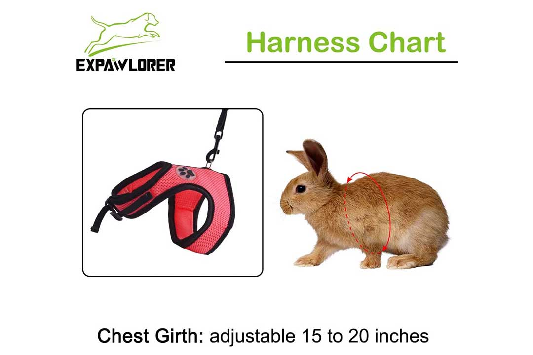 EXPAWLORER 2 Pack Rabbit Harness