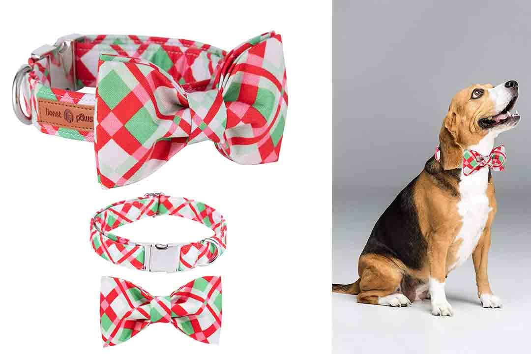 Lionet Paws Christmas Dog Collar