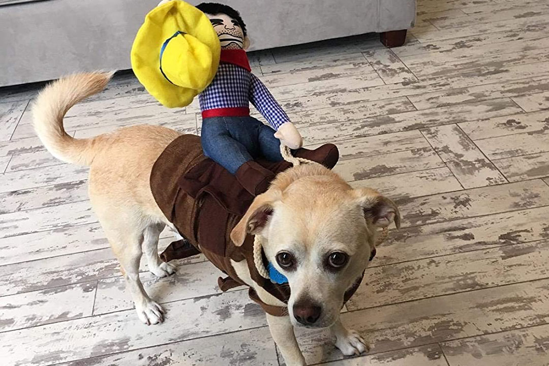 Top 10 Funniest Dog Costume of 2021 Review