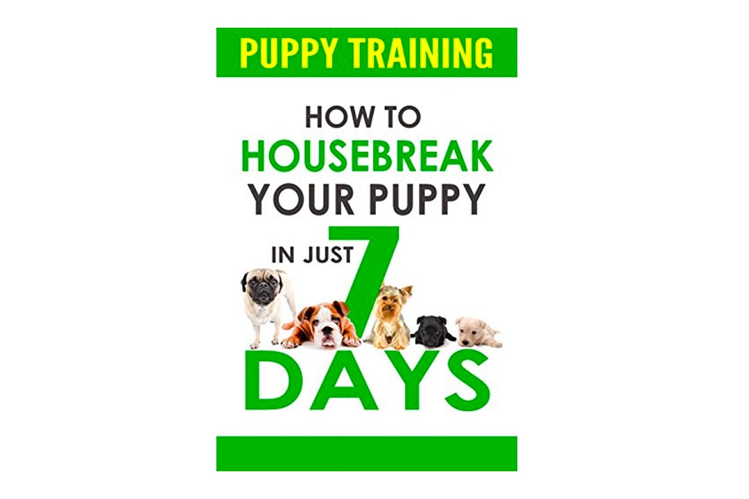 Puppy Training: How to Housebreak