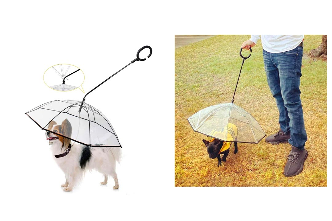 Enjoying Pet Umbrella Dog Walking Umbrella
