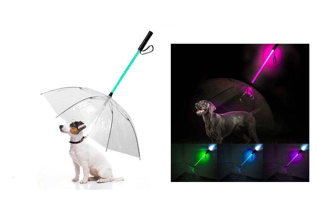 Enjoying Dog Umbrella Leash