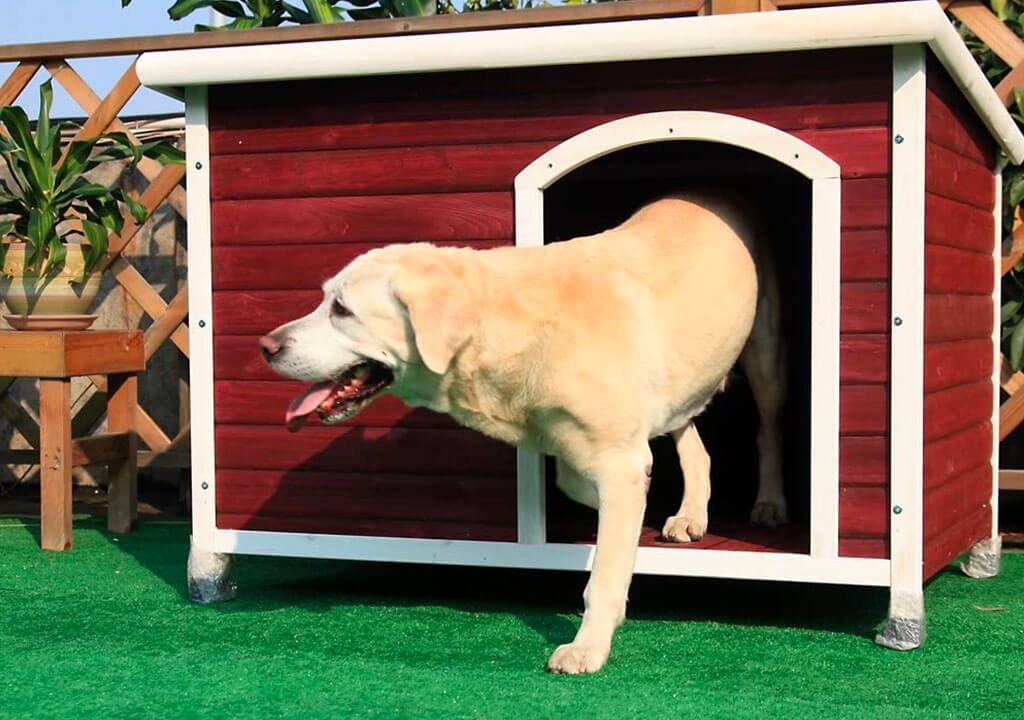 Top 10 Best Dog House Heater of 2021 Review