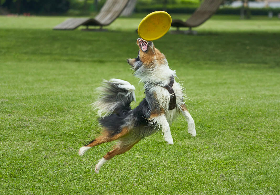 The Best Dog Training Books That Truly Work