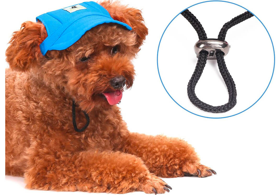 Top 10 Best Hats for Dogs of 2020 Review