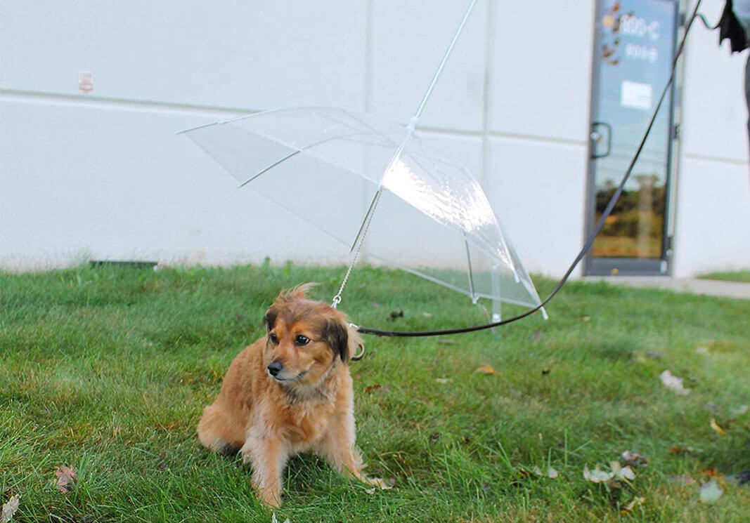 Top 10 Best Dog Umbrella of 2020 Review