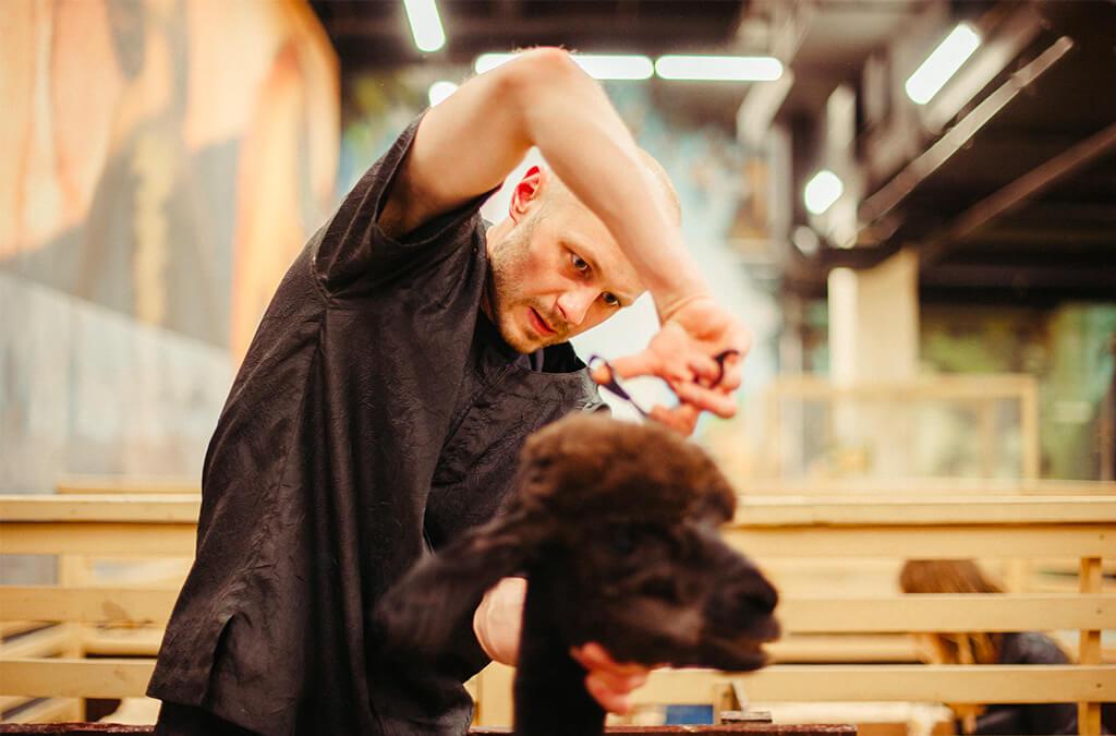 Top 10 Best Dog Grooming Scissors of 2021 Review