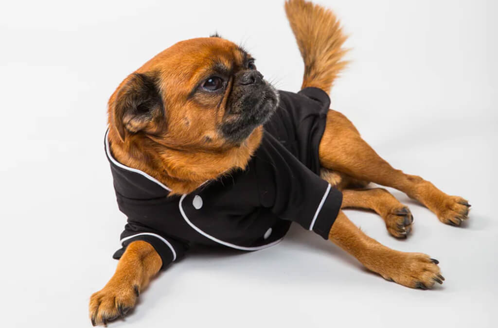 Top 10 Best Dog Pajamas of 2021 Review
